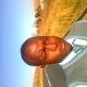 Mthobisi Dladla