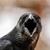 The Crow poet